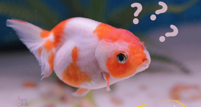 記不起來怎麼辦?「六個小撇步」訓練你的金魚腦!